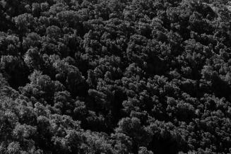 alberi simien mountain