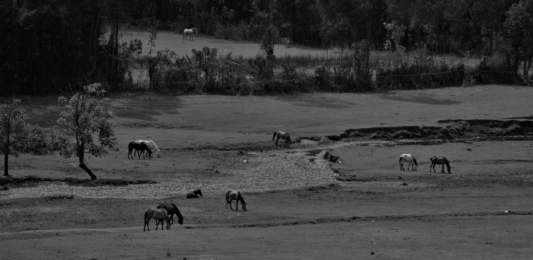 45 cavalli strada verso Debre Marcos