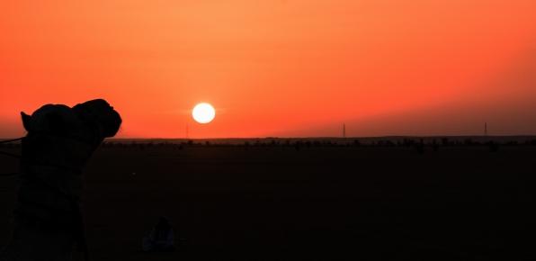 49 il cammello che guarda il tramonto