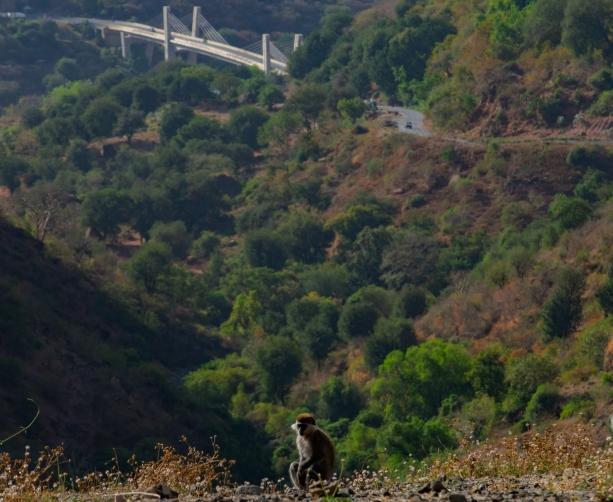 54 scimmia e ponte Dejen- Gohatsion Blue Nile valley