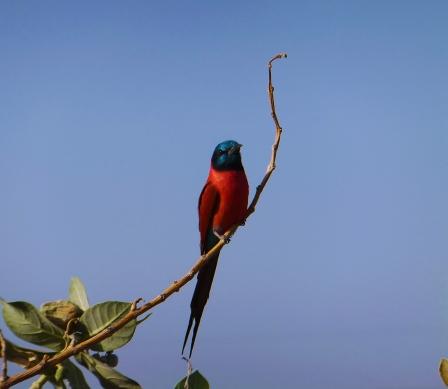 64 uccello colorato