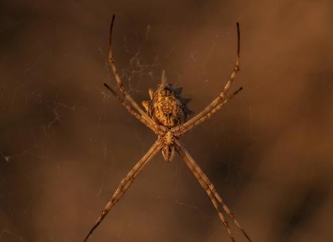 67 ragno bene mimetizzato
