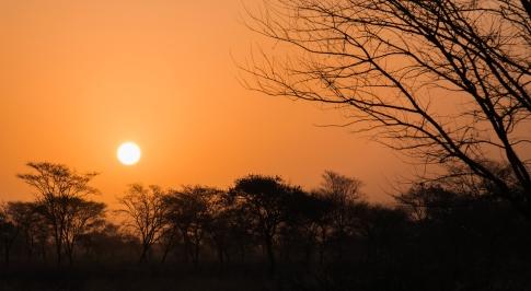 68 tramonto fra gli alberi