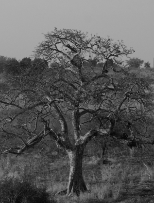 69 albero