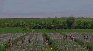 95 lavoratori nei campi