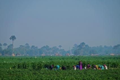 lavoratrici nei campi egitto