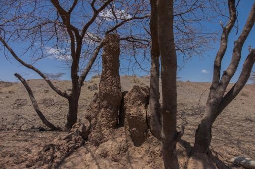 10 termiti