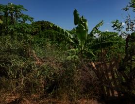 29 coltivazione alberi da frutta