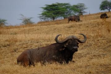 55 Nakuru national park
