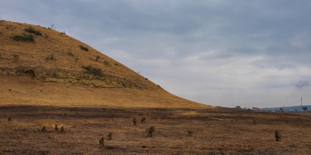57 Nakuru national park