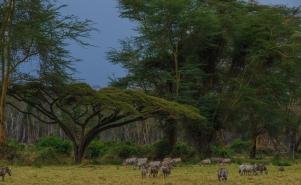 59 Nakuru national park