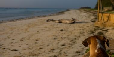 88 Galu beach